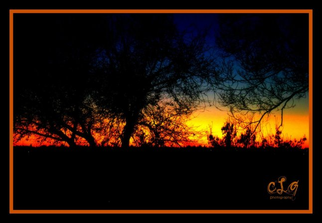 My photography - Sunset through the trees