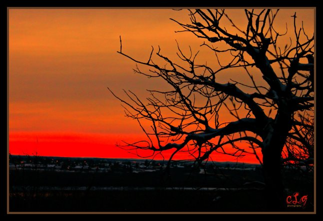 My photography - The wicked tree 1