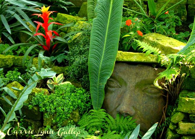 My photography - Face in garden