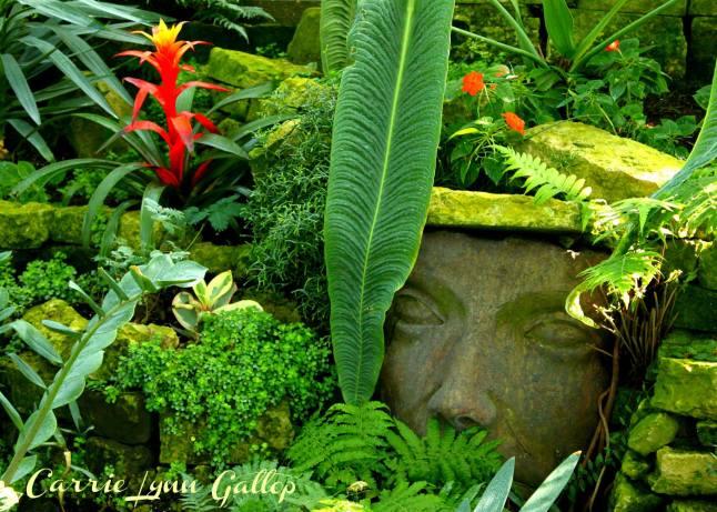 My photography - Face in garden