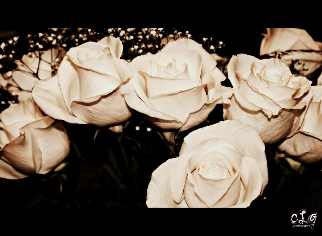 My photography - White roses