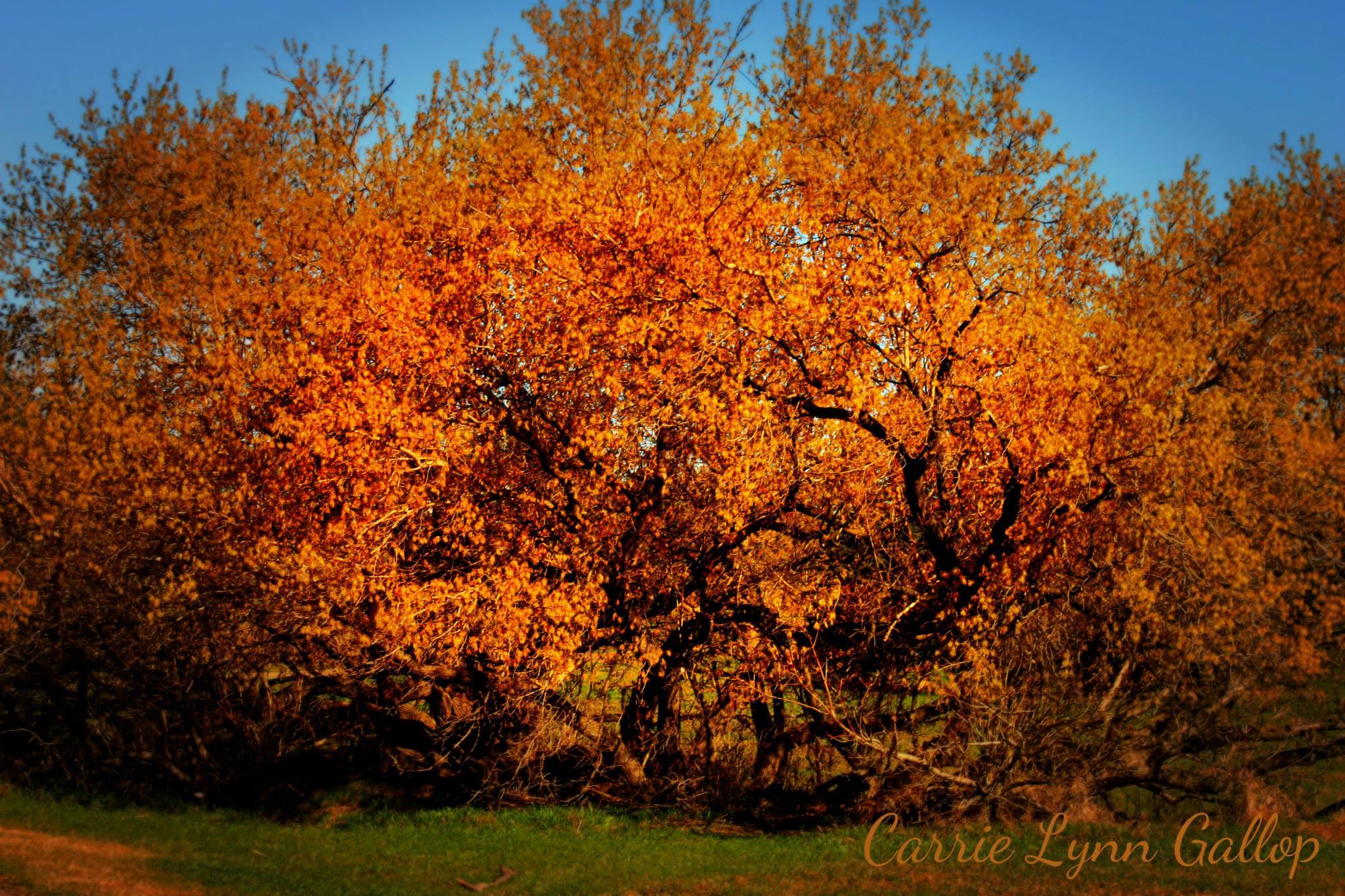 My photography - Orange tree