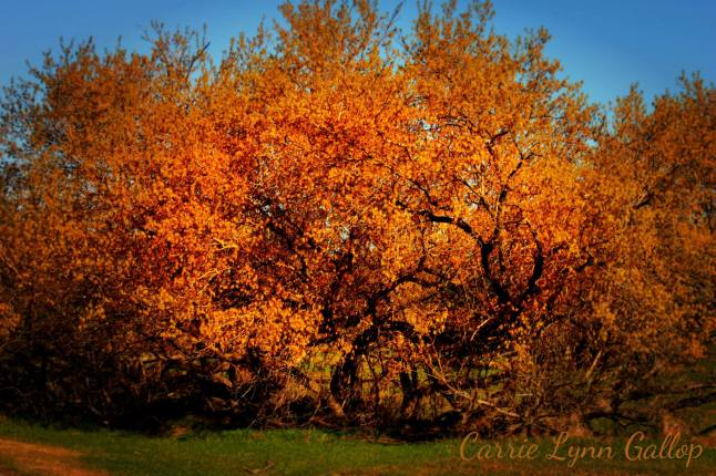 My photography - Orange tree