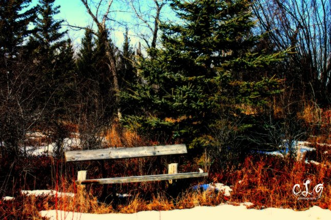 My photography - Deserted bench