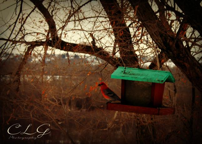 My photography - Birdhouse