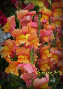 Beautiful flower colors - vingette w sign