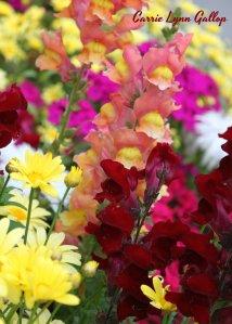 Flower cluster - w sign