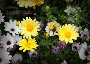 Flowers - vingette w sign