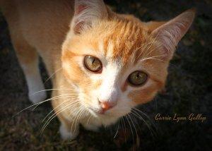 Kitty - vingettte w sign