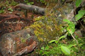 Moss log - vingette w sign