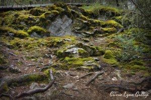 Mossy - vingette w sign