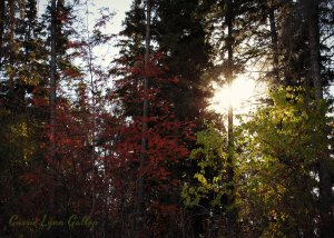 Sun thru colored trees - henry w sign