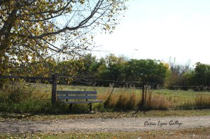 Norsask Bench - w sign