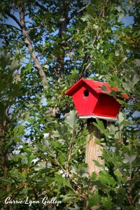 Red Birdhouse - vingette w sign